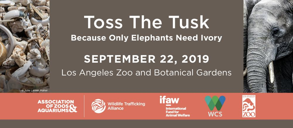 Toss the Tusk information