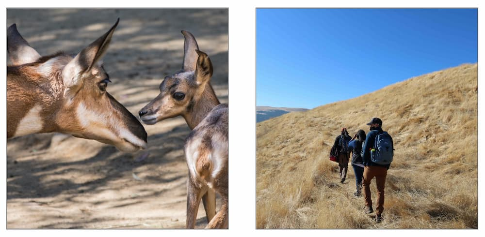 Photo of a mother and baby pronghorn, and a photo of people walking in a field.