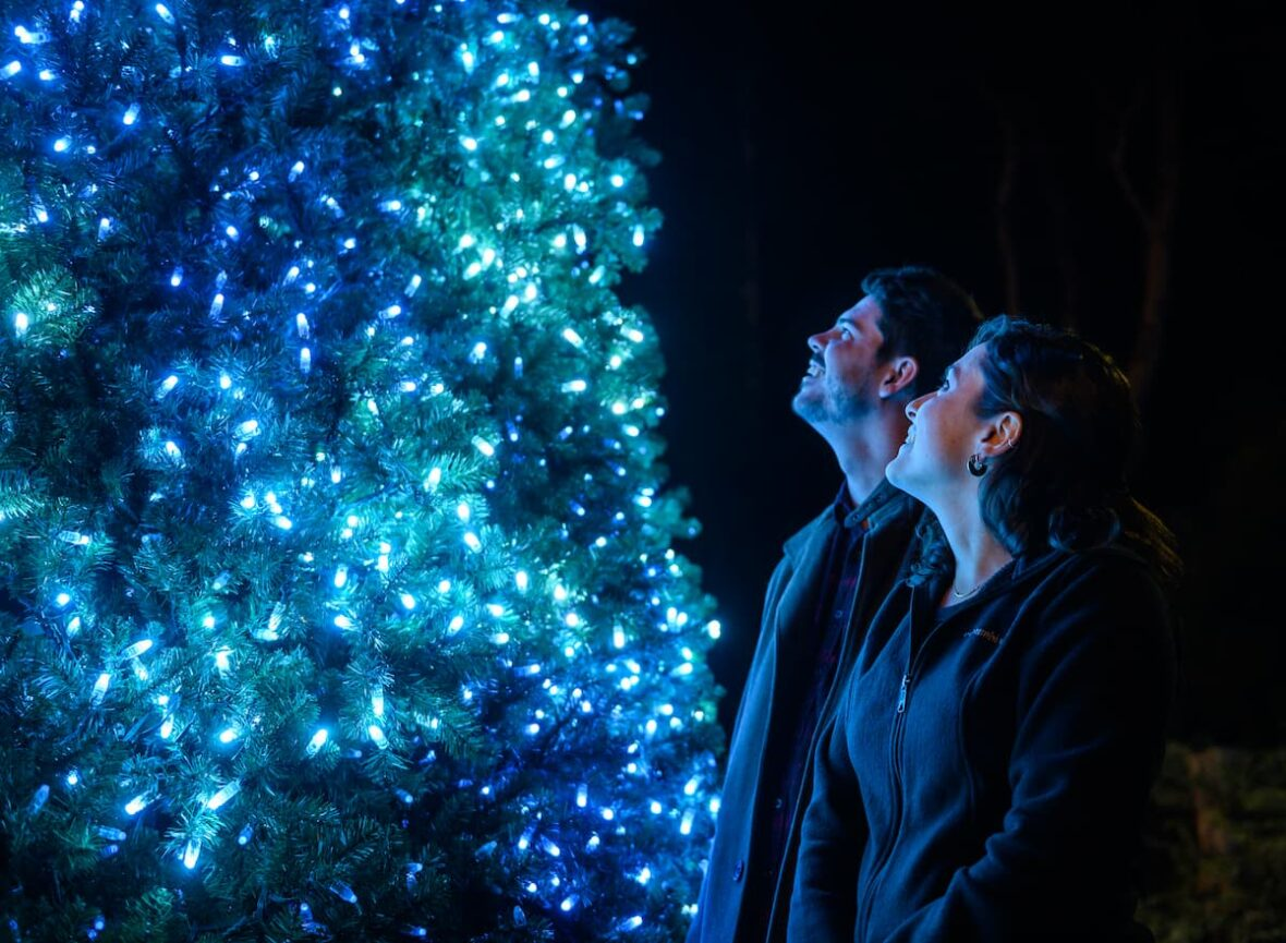 Man and woman gaze upward in awe at a tree covered in bright blue lights.