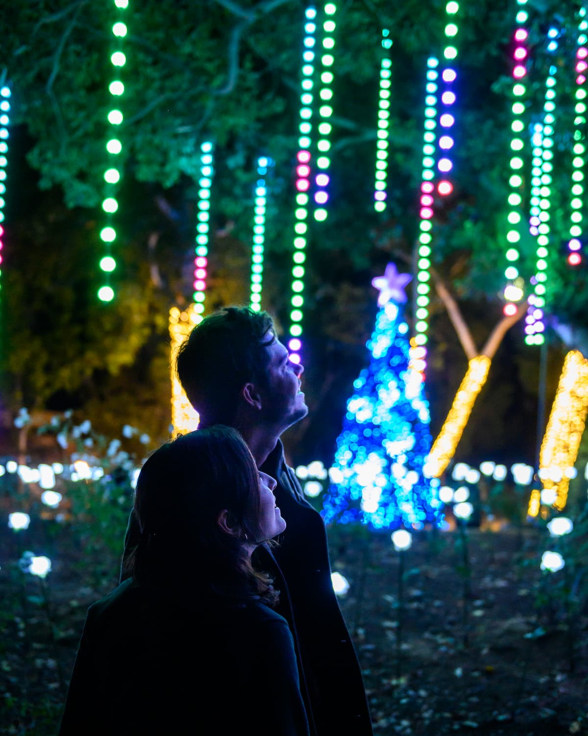 Silhouette of person looking up with holiday lights and tree in background