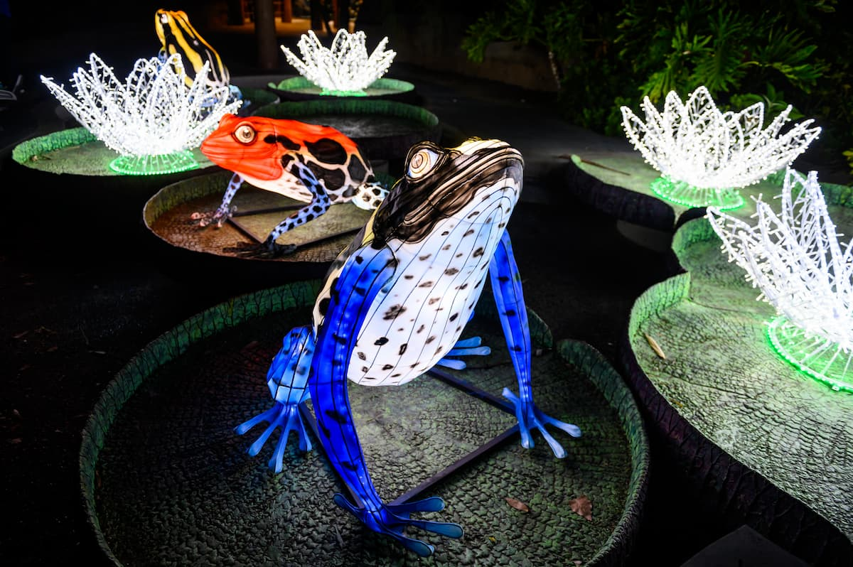 Purple frog and red frog on lily pads with white light lilies